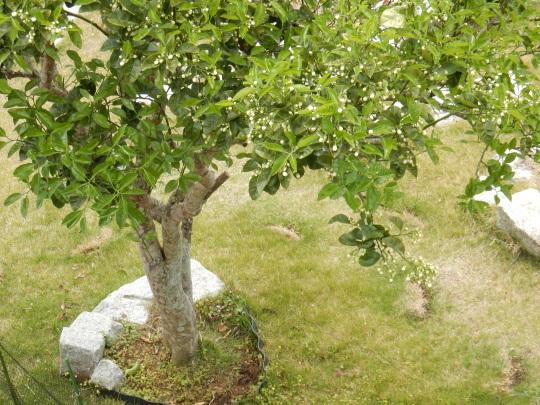 '19,5,9(木)庭の春とローランド様!_f0060461_11293843.jpg