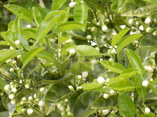 '19,5,9(木)庭の春とローランド様!_f0060461_11304667.jpg