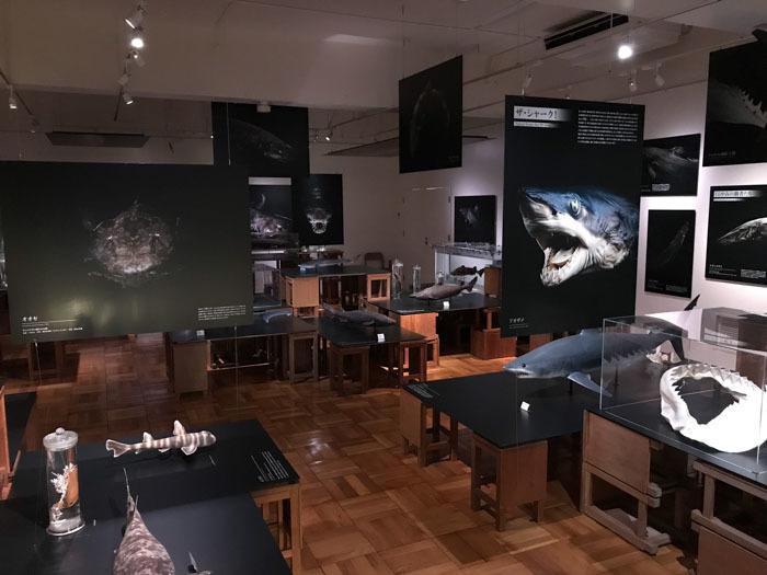 「くらやみの覇者」展 ふじのくに地球環境史ミュージアム やっと深海サメ_d0068664_15244644.jpg