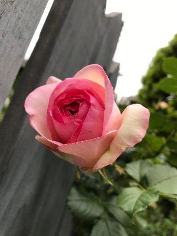 智恵子さん(夢見る乙女)と彌生ちゃん(シンデレラ)!_a0053480_05323314.jpg