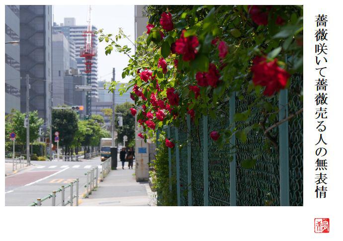 薔薇咲いて薔薇売る人の無表情_a0248481_23205940.jpg