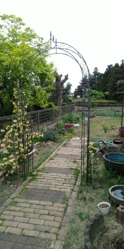 初夏の庭_c0197684_00202076.jpg