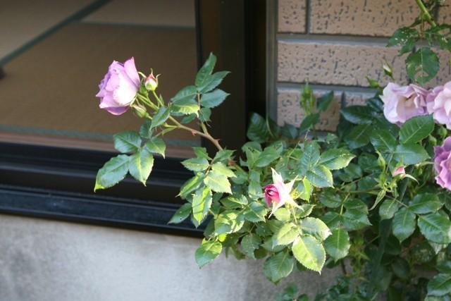 北摂の5月の庭_f0229190_13213868.jpg