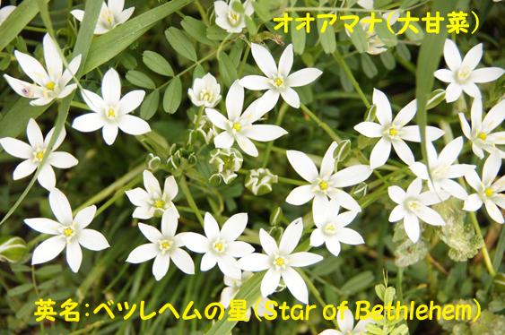c0139591_18042248.jpg