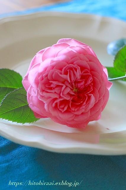 薔薇が咲きました。_f0374092_22054561.jpg