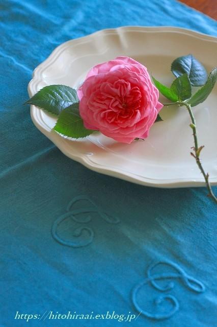 薔薇が咲きました。_f0374092_22071759.jpg