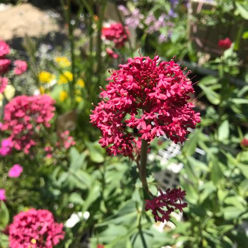 赤い花は気になりますか?_a0139105_00481285.jpg