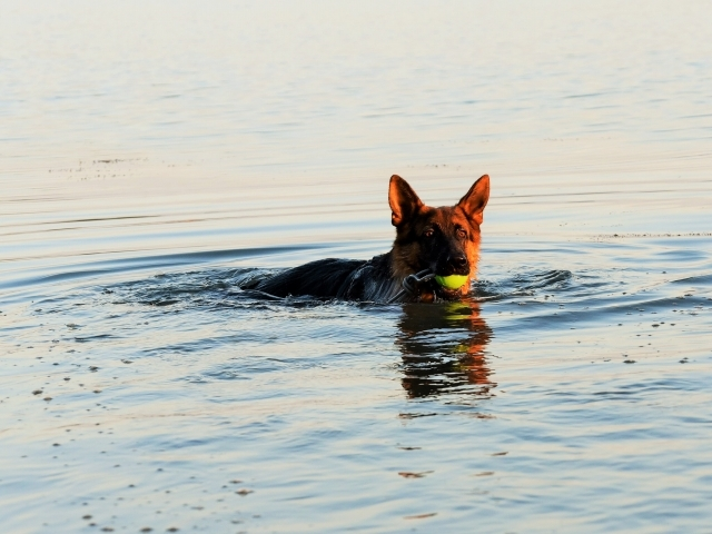ついに泳ぎ始める_d0360206_01523011.jpg