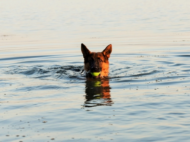 ついに泳ぎ始める_d0360206_01524009.jpg