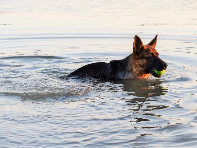 ついに泳ぎ始める_d0360206_01524046.jpg