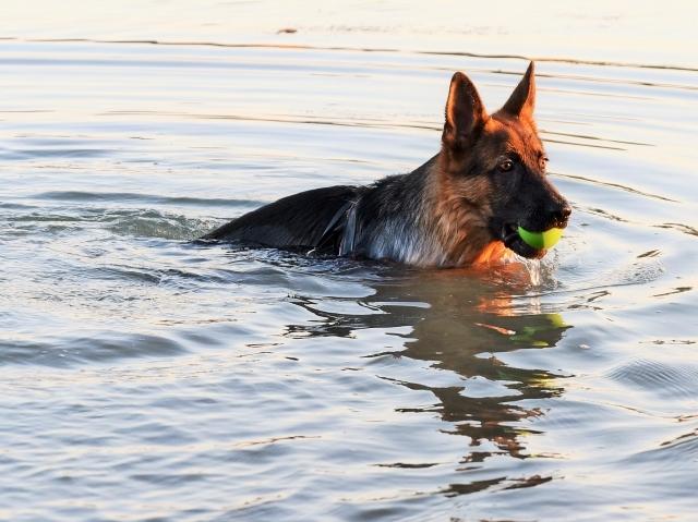 ついに泳ぎ始める_d0360206_01524067.jpg