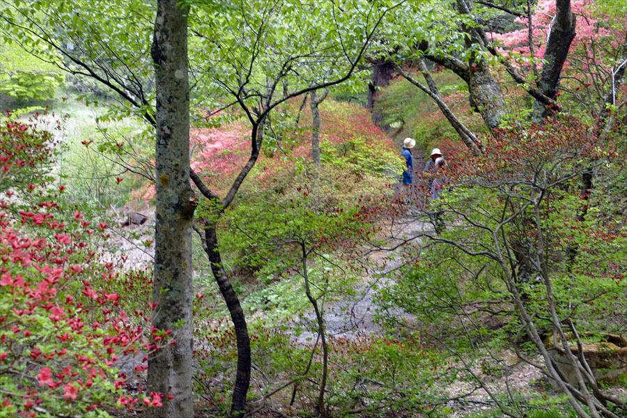 福島県伊達郡桑折町 「春の半田沼自然公園」_d0106628_10475919.jpg