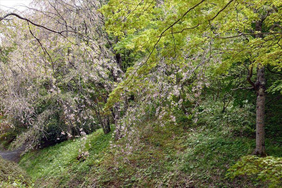 福島県伊達郡桑折町 「春の半田沼自然公園」_d0106628_10481815.jpg