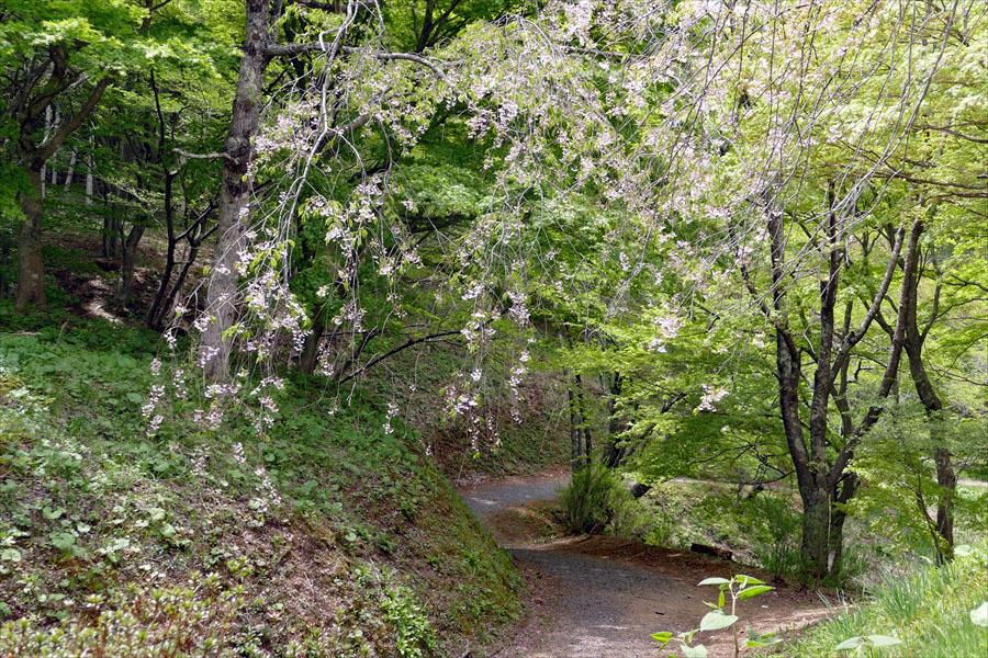 福島県伊達郡桑折町 「春の半田沼自然公園」_d0106628_10483055.jpg