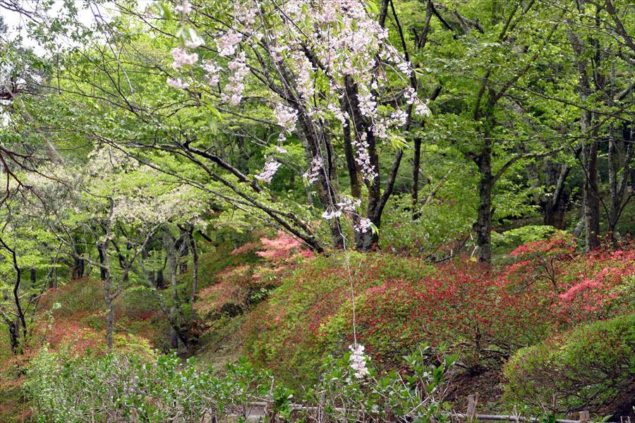 福島県伊達郡桑折町 「春の半田沼自然公園」_d0106628_10484169.jpg