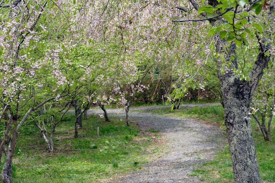 福島県伊達郡桑折町 「春の半田沼」_d0106628_21251388.jpg