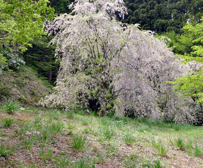 福島県伊達郡桑折町 「春の半田沼」_d0106628_21252248.jpg