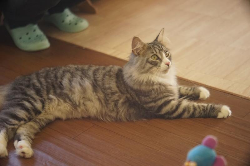 Tomioka Tri Lausar 8cm F3.5_c0109833_20150549.jpg