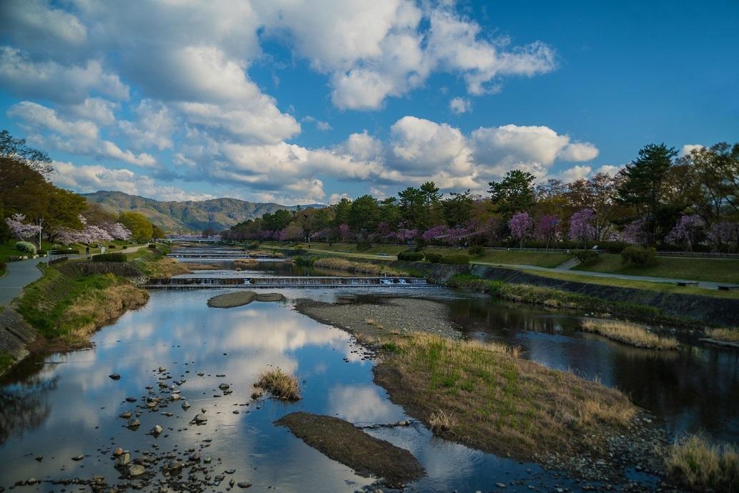 2019京都桜~半木の道_e0363038_11280201.jpg