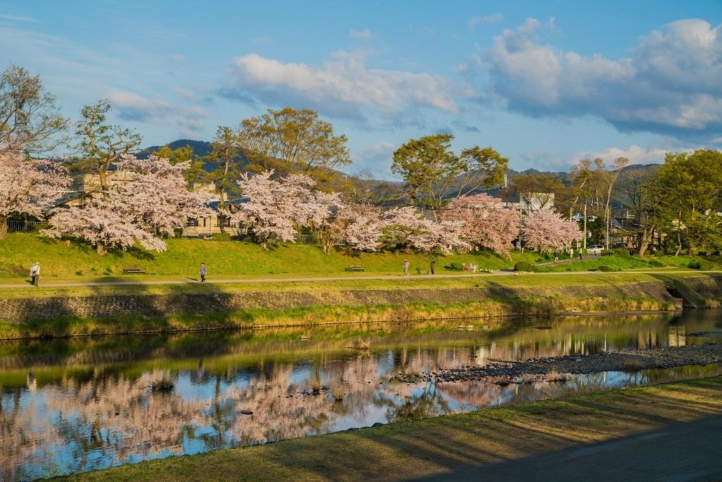 2019京都桜~半木の道_e0363038_11280957.jpg