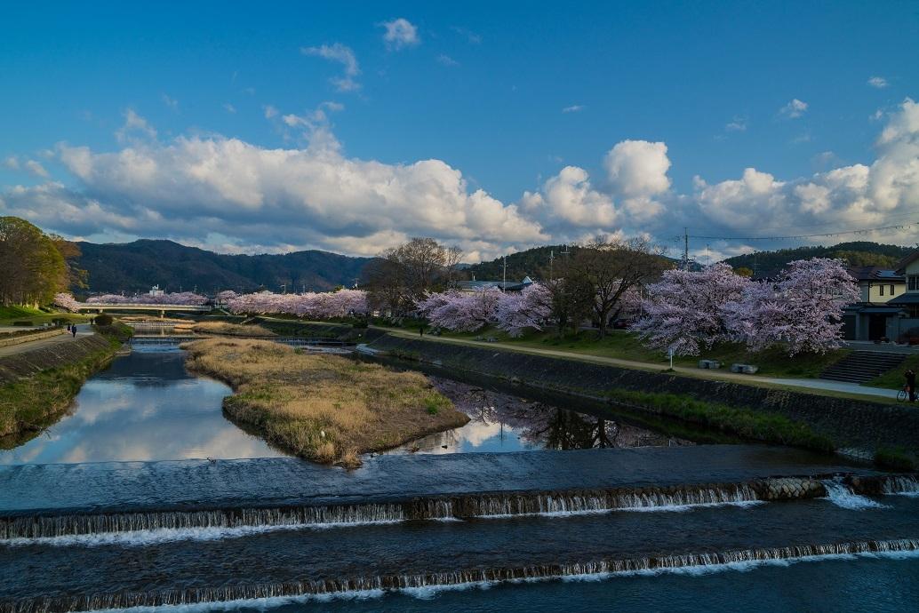 2019京都桜~半木の道_e0363038_11281653.jpg