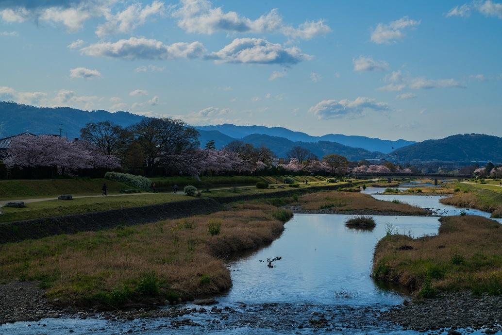 2019京都桜~半木の道_e0363038_11282758.jpg