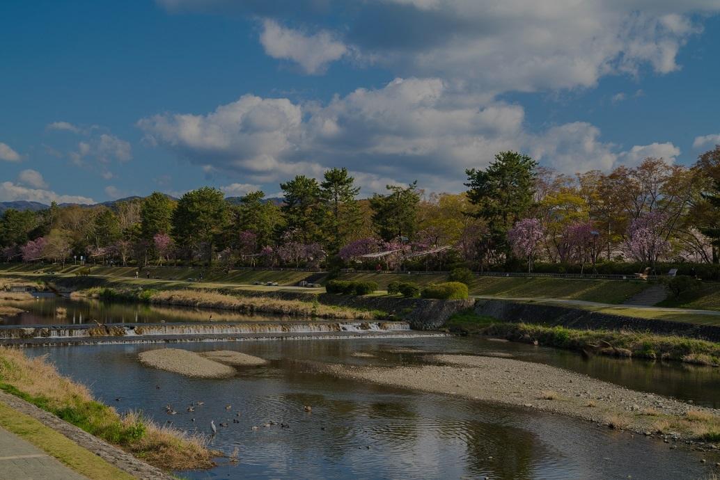 2019京都桜~半木の道_e0363038_11283181.jpg