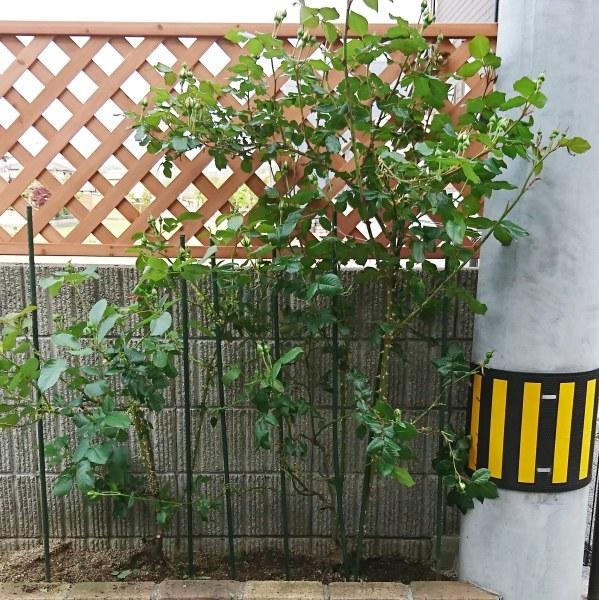 ++ガーデンフェンスを取り付けてみました*++_e0354456_09494032.jpg
