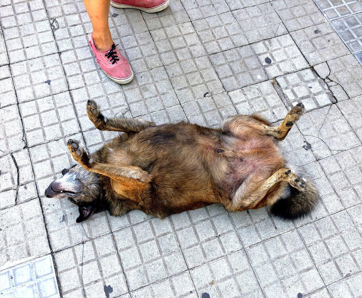 中南米の旅/34  のんびりコロニア街歩き@ウルグアイ_a0092659_21061289.jpg