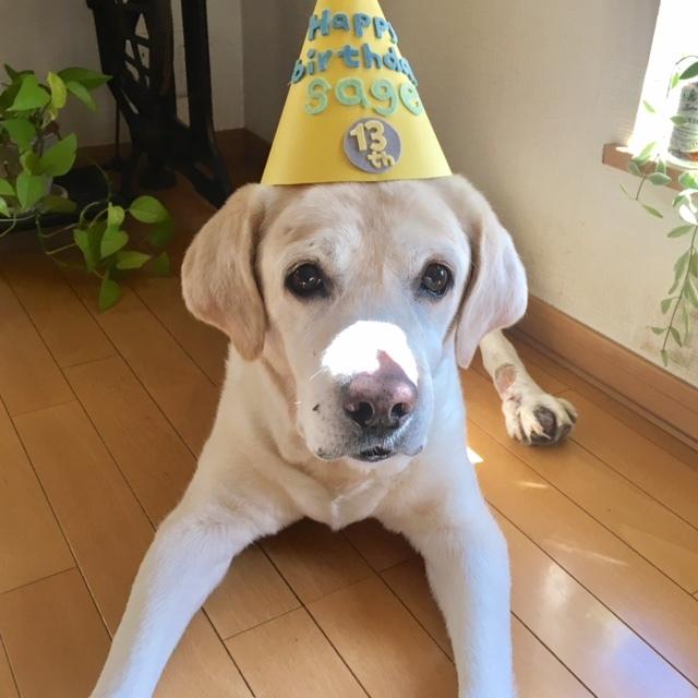 Happy 13th Birthday  この日を迎えられたことに感謝_a0165160_16153188.jpg