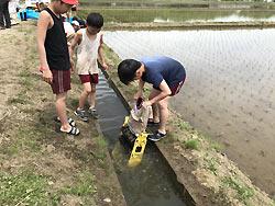 田植え体験(緑ヶ丘小・北郷小) _d0247484_1530915.jpg