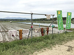 田植え体験(緑ヶ丘小・北郷小) _d0247484_1531586.jpg