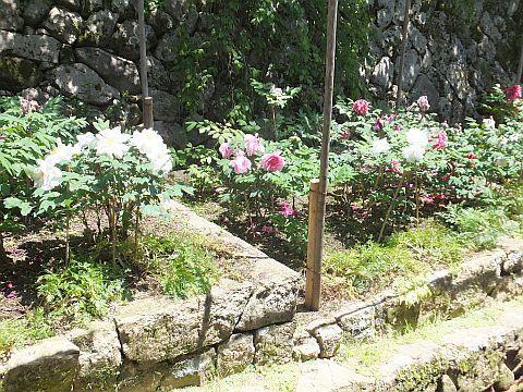奈良 長谷寺へ_e0146484_13444353.jpg