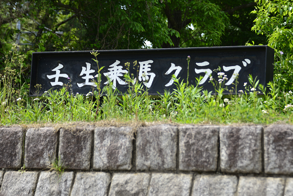 2019.5.11 壬生ジャンピングホースショーⅢ☆エーシンピーシー【A Shin PC】_f0250322_22565278.jpg