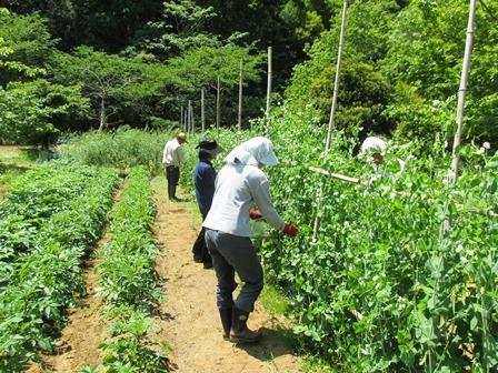 落花生の栽培体験をしよう_a0123836_13382773.jpg