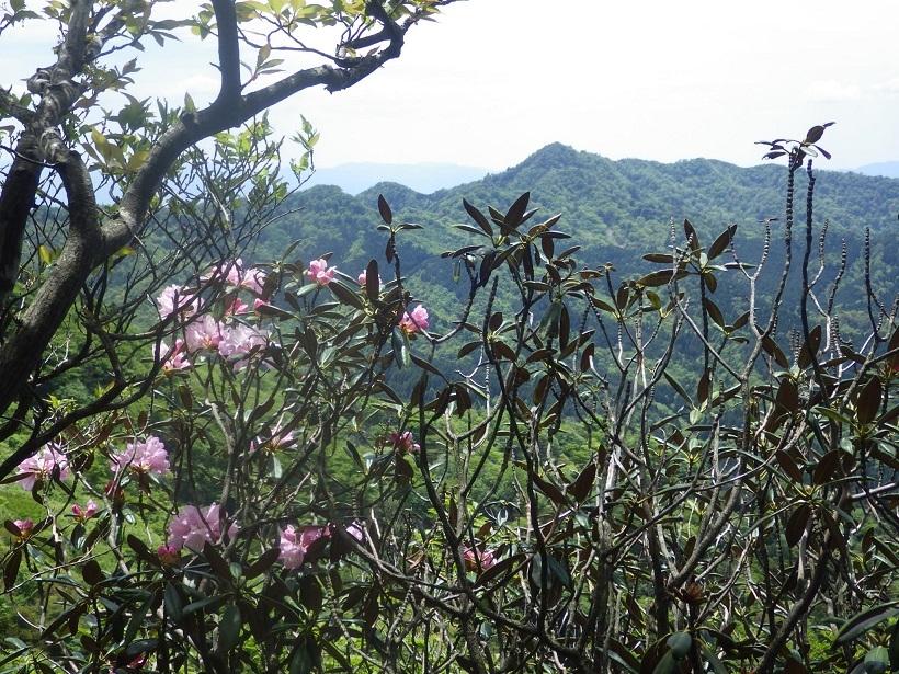 裏英彦山の新緑_e0164643_16363045.jpg