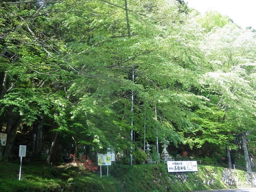 裏英彦山の新緑_e0164643_16365019.jpg