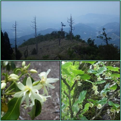 裏英彦山の新緑_e0164643_17001197.jpg