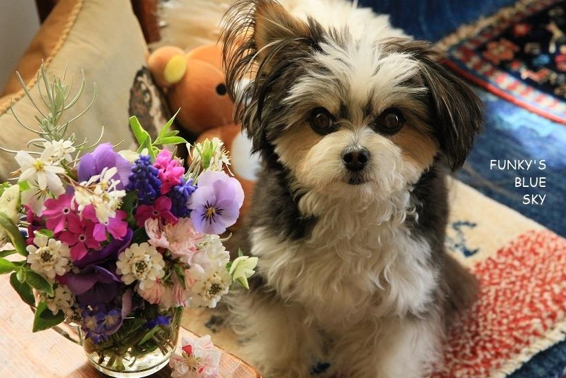庭の小さなブーケ** (4月20日)_c0145250_09300835.jpg