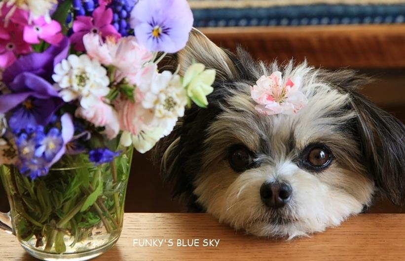 庭の小さなブーケ** (4月20日)_c0145250_09301877.jpg