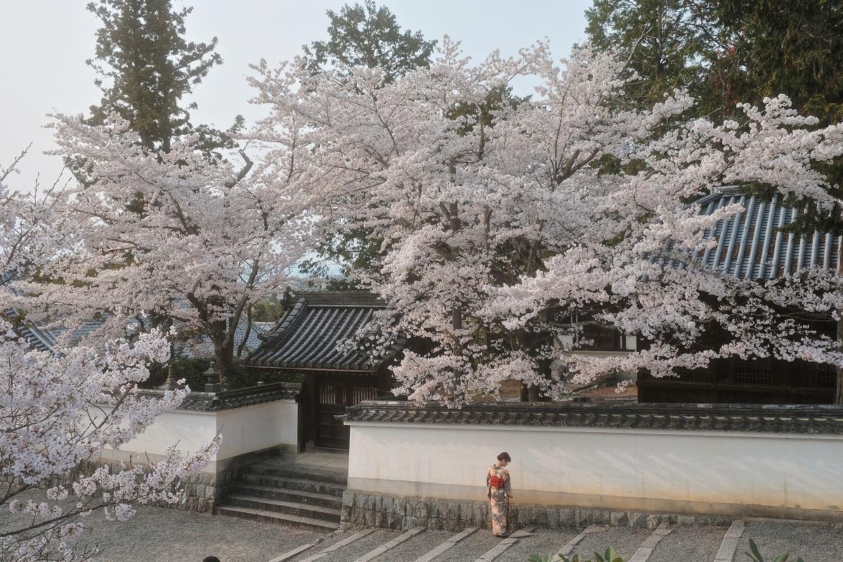 桜 2019_f0021869_23044682.jpg