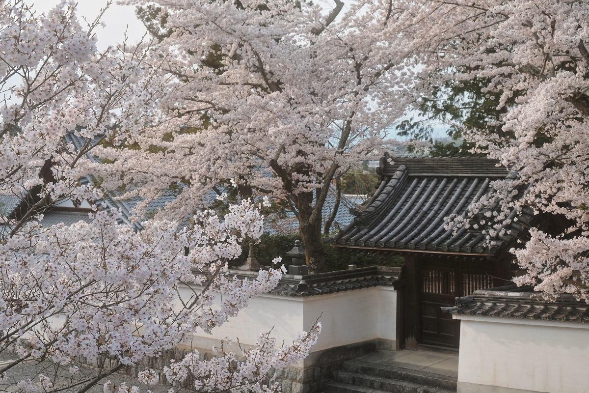 桜 2019_f0021869_23044688.jpg