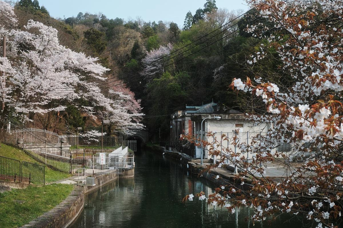 桜 2019_f0021869_23044742.jpg