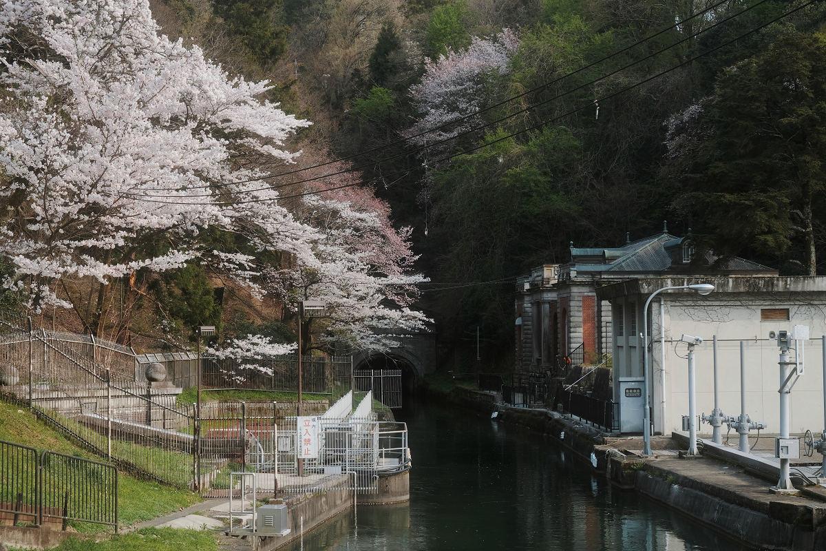 桜 2019_f0021869_23044764.jpg