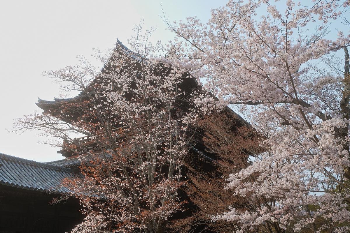 桜 2019_f0021869_23044797.jpg