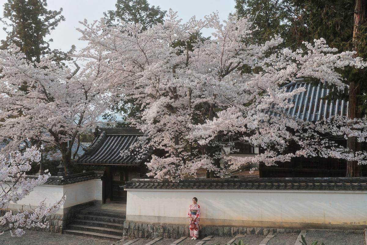 桜 2019_f0021869_23044866.jpg