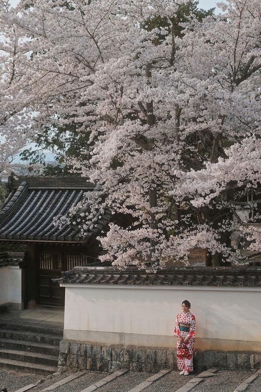 桜 2019_f0021869_23044888.jpg