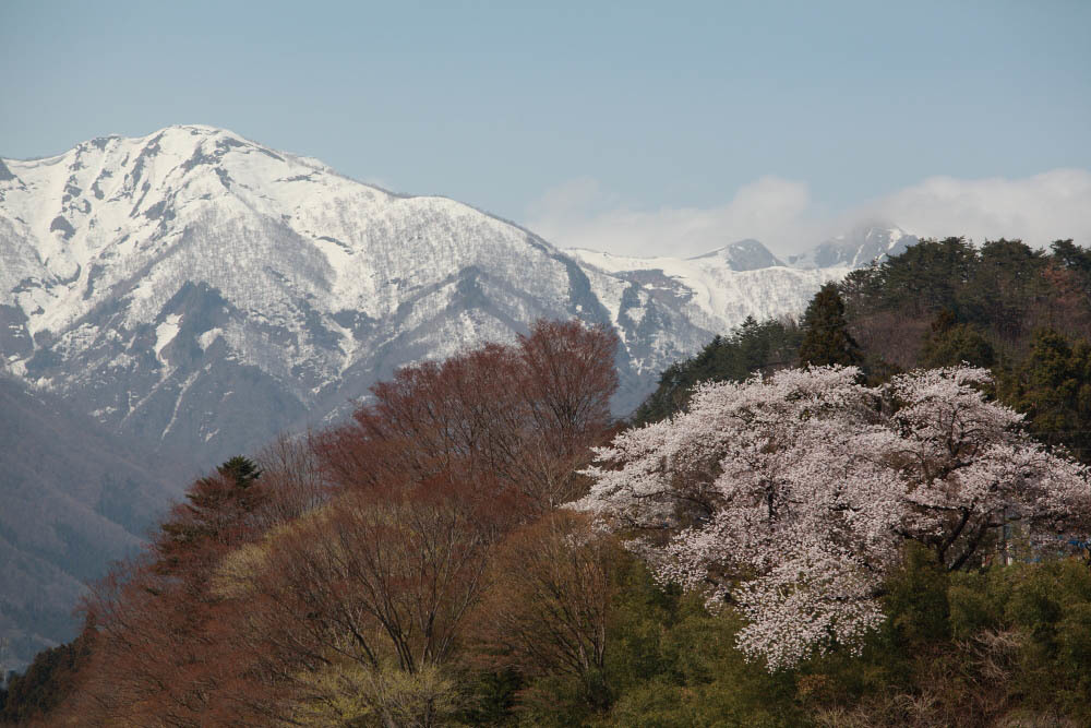 水上町猿ケ京温泉 赤谷湖の新緑とサクラ 前半 _e0165983_09550004.jpg