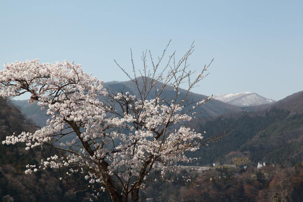 水上町猿ケ京温泉 赤谷湖の新緑とサクラ 前半 _e0165983_09551093.jpg