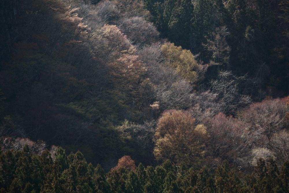 水上町猿ケ京温泉 赤谷湖の新緑とサクラ 前半 _e0165983_09551711.jpg